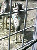 image/hpt-2006-03-19T14:10:52-2.jpg